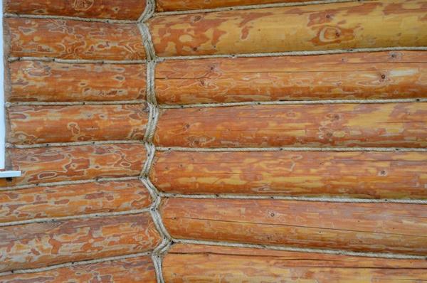 стены деревянного дома, короед